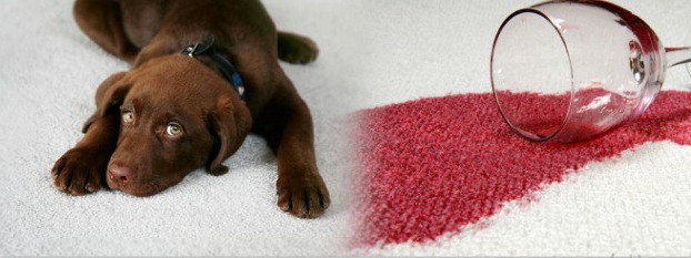 cleaning red wine from carpets milton keynes